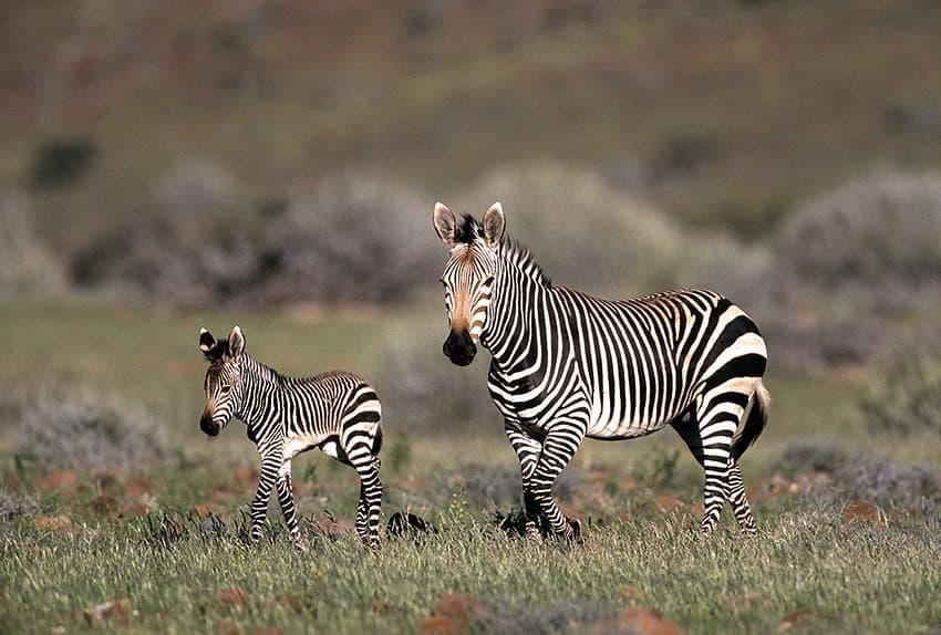 Gondwana-Collection-Honouring-Nature-1